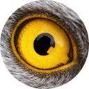 Midnight Rider ⭐️⭐️⭐️ Parler Account @QAnon76 profile picture